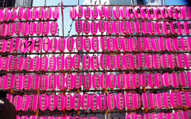 桜丘地区近辺桜祭