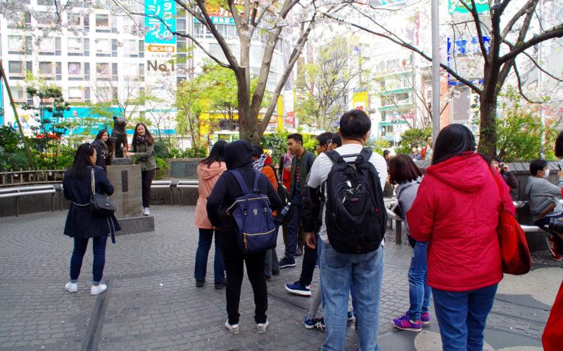 ハチ公前広場桜